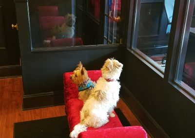 Auggie sitting on ottoman looking at his reflection in window while in daycare at Executive Dog Lounge.