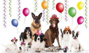 dog birthday party, dog daycare party