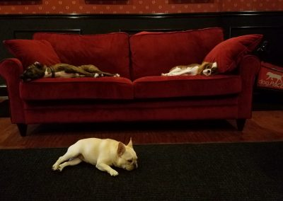 Millie, Goldie, Bella napping in daycare --