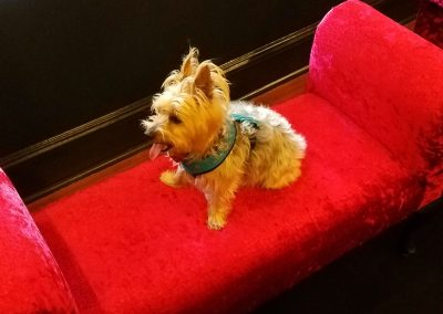 Skylar loving the velvet ottoman at Executive Dog Lounge.