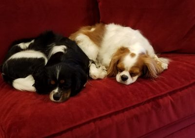 Chester & Charlotte napping.  It doesn't get any cuter than this!