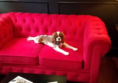 Goldie feeling relaxed in reception  @ the Executive Dog Lounge--
