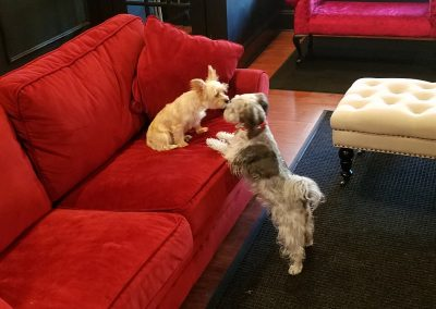 Lilly & Trouble saying hello at Executive Dog Lounge.