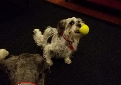 Trouble playing with tennis ball; Bobby has 'been there and done that!'