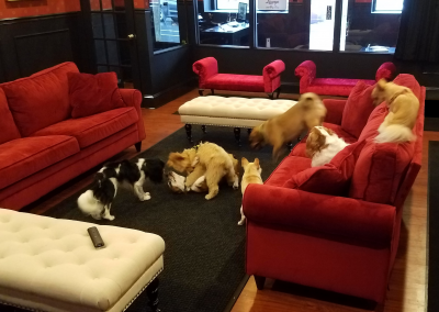 Dogs playing in daycare at Executive Dog Lounge in Jersey City.